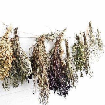 Herbs, Nature, Natural, Dried Herbs, Tea, Plants
