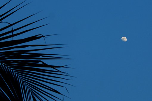 Moon, The Sky, Leaf, Nature, Space
