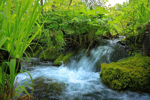 Waterfall, Plant, Stones, Water, Nature, Landscape