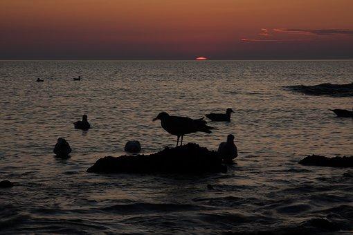 Gulls, North Sea, Sunset, Rest, Coast, Sea, Bird