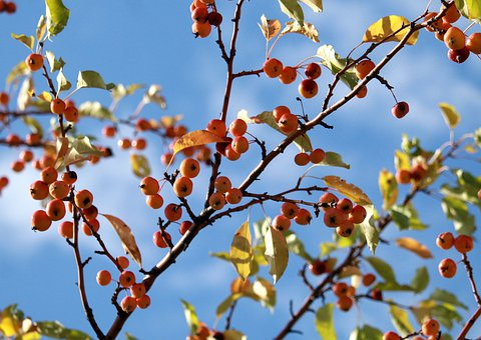 Apple, Apples, Harvest, Nutrition, Red, Fresh, Nature