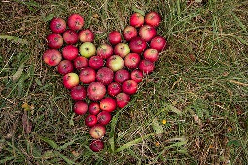 Autumn, Apple, Red, Food, Fruits, Ripe, Garden, Fresh