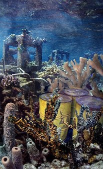 Underwater, Sea, Coral, Fish, Water, Ocean, Deep, Reef