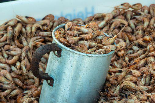 Crabs, Short-tailed Crabs, Sea, Crustaceans, Salt Water