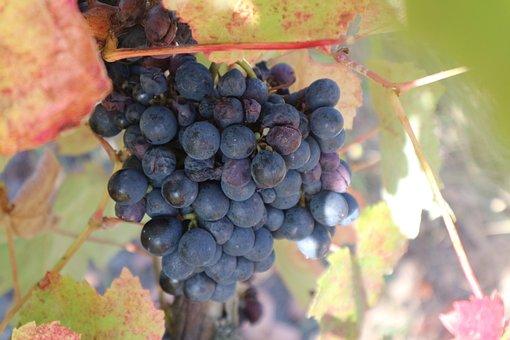 Grape, Summer, Portugal, Fruit