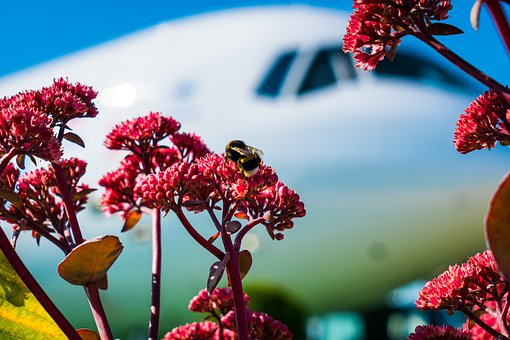 Plane, Bumblebee, Flower, Summer, The Show, Static