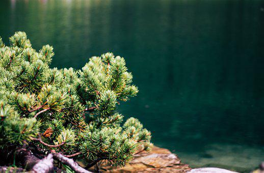 Green, Forest, Lake, Water, Nature, Landscape, Tree