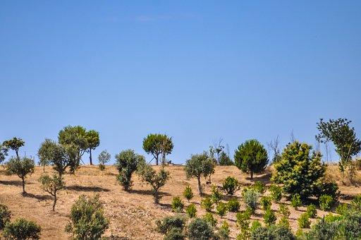 Field, Farm, Trees, Olive Tree, Agriculture, Farmland