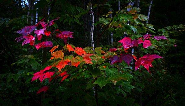 Leaves, Fall, Nature, Colorful, Mood, Trees, Maple