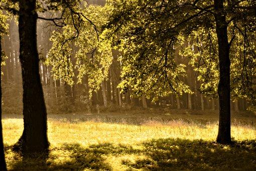 Forest, Trees, Nature, Landscape, Autumn, Scenic, Rest