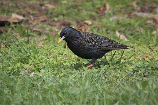 Bird, Black, Yellow, Bright, Sun, Beak, Eye, Wellington