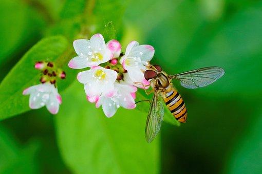Bee, Flower, Dew, Morning, Green, Rice, Nature, Bokeh