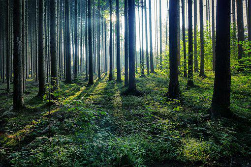 Forest, Trees, Nature, Landscape, Autumn, Hiking