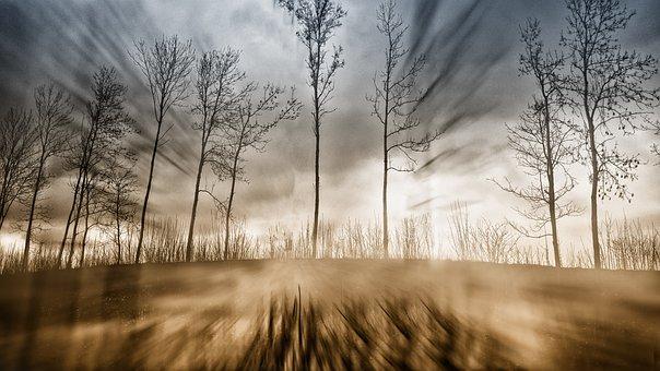 Nature, Forest, Fog, Scenic, Autumn, Mystic, Mood