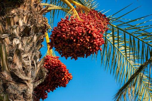 Harvest, Rosh Hashanah, Traditions, Fruits