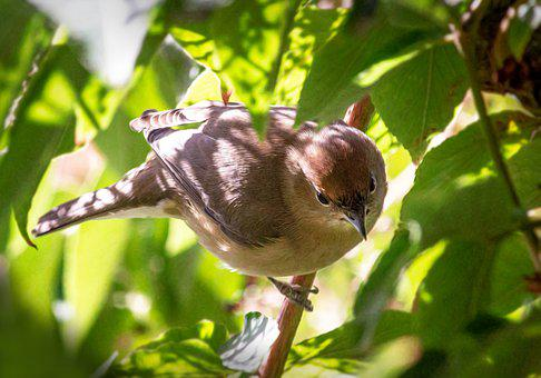 Bird, Leaves, Tree, Animal World, Nature, Autumn