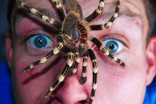 Birdman, Molt, Spider, Eyes, The Fear, Phobia, Man