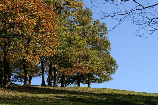 Autumn, Indian Summer, Beautiful, Nature, Meadow, Trees