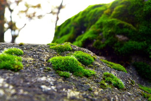 Nature, Green, Background, Mood, Moss, Plant, Romantic