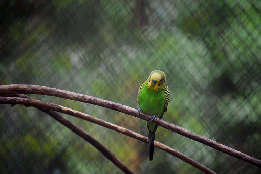 Parrot, Tree, Branch, Bird, Spring, Nature, Small