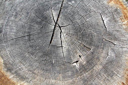 Wood, Tree, Letokruh, Nature, Tribe, Old, Textures