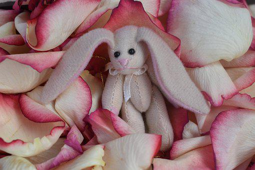 Bunny, Cute, Easter, Animal, Adorable, Outdoors