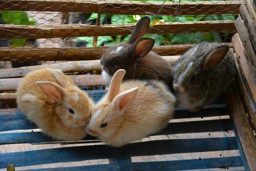 Rabbit, Cage, Animal, Pet, Cute, Domestic, Shy, Nature