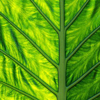 Leaf, Structure, Pattern, Plant, Green, Close Up
