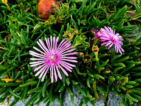 Nature, Flowers, Plants, Summer, Pink, Petal, Garden