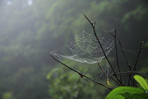 Spider Web, Spider, Macro, Scary, Web, Pattern, Trap