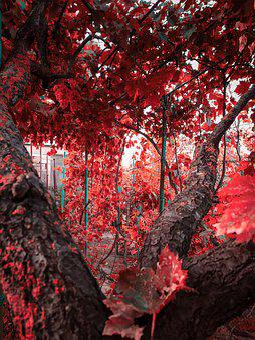 Sheet, Garden, Dacha, Vacation, Fantasy, Red, Tree