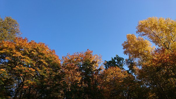Autumn, Fall, Trees, Color, September, Leaves, Nature