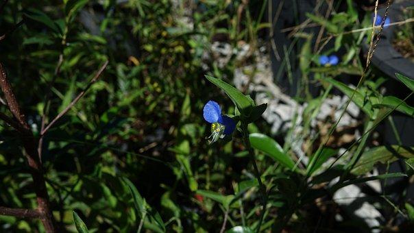 Violet, Flowers, Bo, Plants, Purple, Petal, Summer