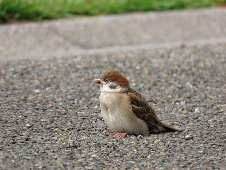 Animal, Park, Lawn, Ground, Bird, Wild Birds, Sparrow