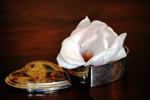 Blossom, Bloom, Mother's Day, Magnolia, Heart, Patina