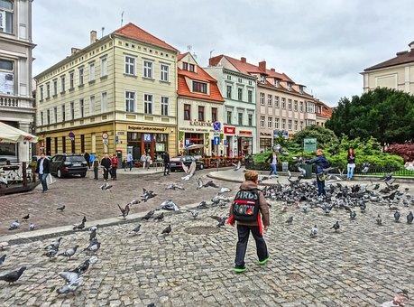 Market Square, Bydgoszcz, Pigeons, Doves, Flock, Birds
