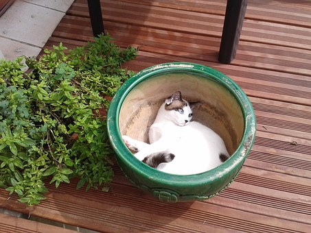 Cat, Animal, Adorable, Happy, Flower Bed, Hiding