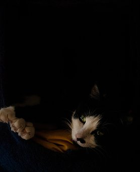 Cat, Domestic Animal, Nap, Comfort, Black Background