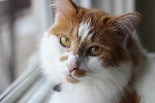 Cat, Animal, Domestic Animal, Fart, Feline, Cat Face