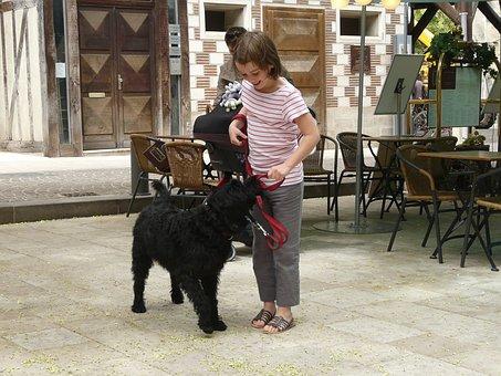 Dog, Animal, Pet, Labradoodle, Black, Girl With Dog