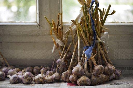 Garlic, Comfort, Harvest, Dacha