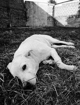 Dog, Sadness, I Long, In Black And White, Photography
