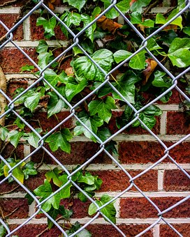 Ivy, Fence, Bricks, Brick Wall, Outdoor, Wall, Plant