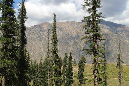 Nature, Tree, Mountains, Forest, Natural, Plant