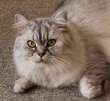 Cat, Portrait, Cat Face, Pet, Face Cat, Close Up, View