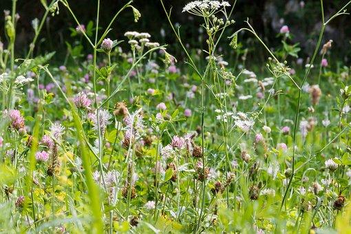 Meadow, Flowers, Summer, Flower Meadow, Wild Flowers