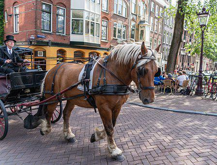Amsterdam, Horse, Ride, Carriage, Holland, Netherlands