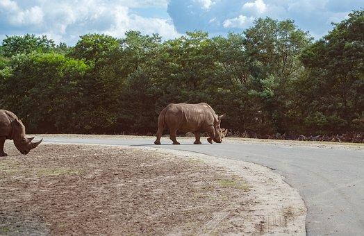 Rhino, Rhinozeross, Road, Away, Obstacle, Dodge, Yield