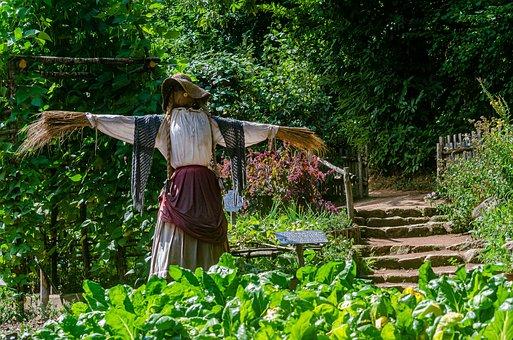 Garden, Scarecrow, Chard, Vegetable, Plantation