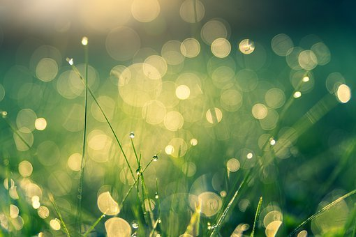 Meadow, Morgentau, Bokeh, Nature, Dew, Dewdrop, Drip